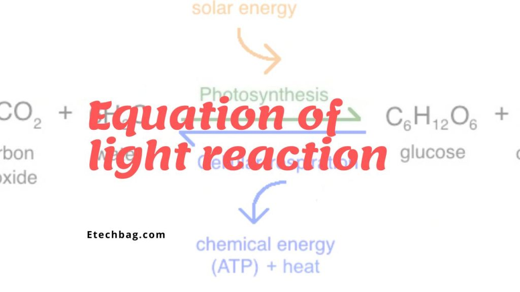 Where does light reaction take place